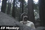 Elf Monkey